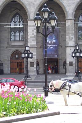 Horse and Carriage in front of Montreal church